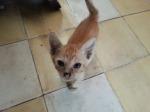 Orange kitten is happy to be held.