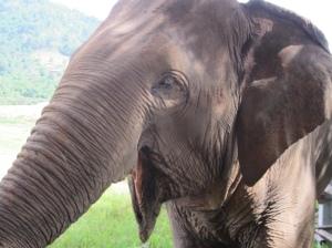 elephant blind