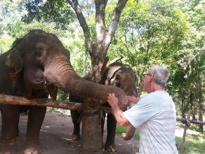Elephants 13