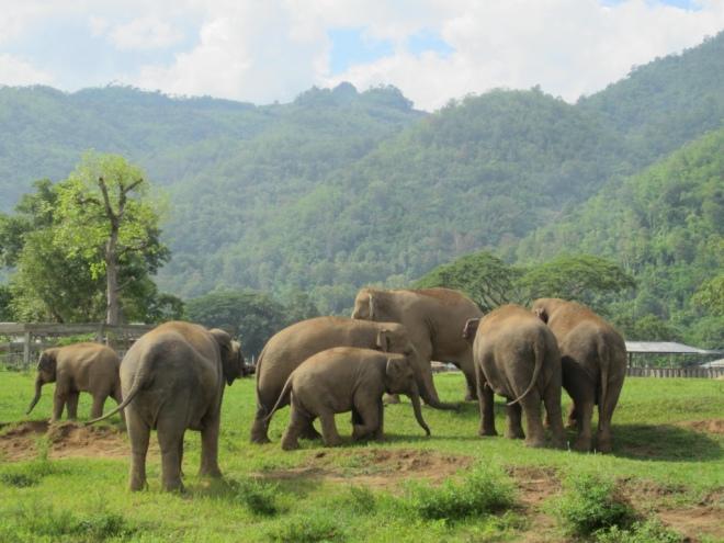 elephants 17