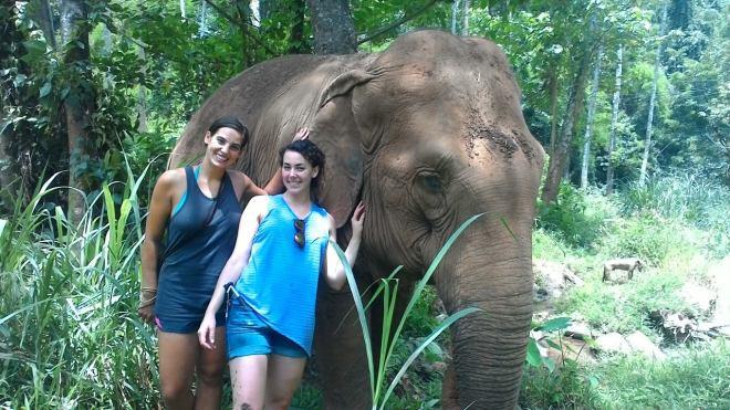 Elephants 6