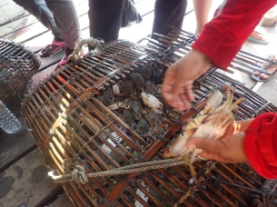 Crabs are sold from traps immediately after being hauled from the water.