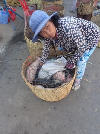 Vendor sells suckling pigs.