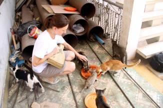 An expat feeding felines. . .