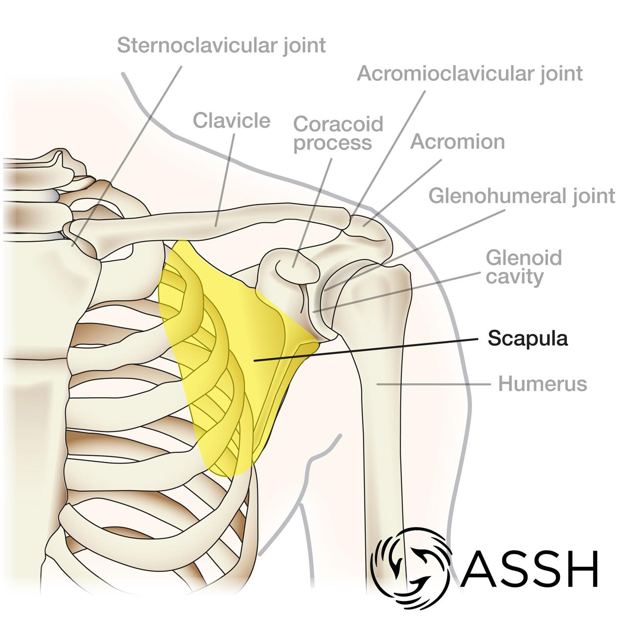 ShoulderPain_Fig1